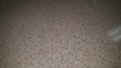 The secret? PSP self-leveling overlayment: This close-up of the polished concrete / terrazzo-like finished floor of the Waukesha County Technical College shows a seamless – and durable – surface.