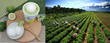 Top Summer Destination - Taiwan Summer Solstice 235 Experience Tea Tours for a Cool Summer