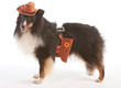 Pets are Getting in the Halloween Spirit