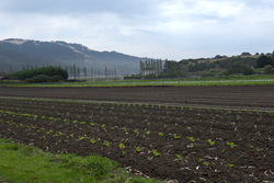 Star Route Farms, located on 100 acres in Bolinas, California, is the state's oldest continuously operating certified organic farm.  The University of San Francisco has purchased the property and will maintain the organic farming operations while explorin
