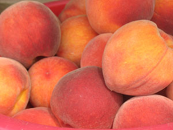 Franklin County orchards are bearing delicious peaches all summer and many are expected to be producing through Labor Day.