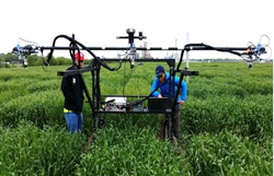 Two of the researchers moving the phenotyping cart through a young wheat field.