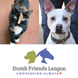 Tom's Insurance is Supporting the Dumb Friends League Rescue Shelter in Campaign to Help Homeless Pets Get the Care They Need and Find Their Forever Homes