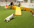 LA Dogworks in Los Angeles, CA implemented the patented K9Grass Flushing System in their 10,000 square foot state-of-the-art facility for dogs.