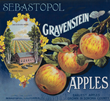 Gravenstein Apples from Sebastopol
