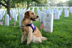 Veterans, dogs, service dogs, military,