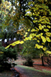 Autumn at Cazadero