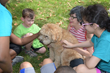 One of the two therapy dogs who joined the campers this year.