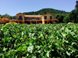 Engel & Völkers Brings Stunning Napa Valley Estate To Market