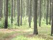 13,747 acres of Alabama land sells