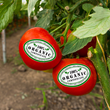 Fruits and Veggies - More Matters Month
