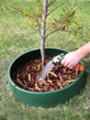 Plant and Protect Newly Planted Trees This Fall in Six Easy Steps