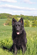 Protection Dog Programs