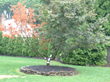 Trees with Health Problems Change Color or Drop Leaves Too Early; Giroud Tree and Lawn Urges Homeowners to Be Alert for Fall Warning Signs of Sick Trees