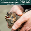 The Vanderbeck Agency Leads Long Island Charity Effort to Raise Support for the Volunteers for Wildlife Organization