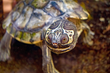 Tennessee Aquarium Researchers Create First Map of North American Turtle Communities