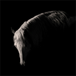 Constance Jaeggi, fine art equine photographer, photography exhibition, large format black and white photography, Mercuria, Fort Worth, Texas, National Cutting Horse Association, J Five Horse Ranch, J 5 Horse Ranch, Cowgirl Museum, cutting horse, TCU, Wea