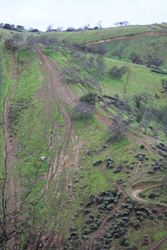 Off-Highway Vehicle (OHV) use causes ongoing and permanent environmental damage. Here, hillside erosion from illegal hill climbs at Carnegie State Vehicle Recreation Area in the East Bay.