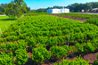 Premier Sotheby's International Realty Lists Iconic Keel & Curley Winery in Plant City, Florida, For Sale
