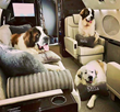 A Couture Private Jet Takes Flight With First Class Pups Onboard