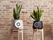 The European Union Invests €2 Million in Clairy, the Smart Flowerpot the Fights Indoor Pollution