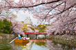 You can now Book a Japan Cherry Blossom Tour that is rising in Demand among Americans