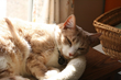 Katzenworld Presents Guide on 4 Steps to Hire a Great Cat Sitter