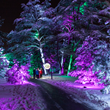 Trees are lit in mesmerizing hues as visitors travel a one-mile wooded path.