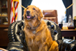 DC Stands for Dogs and Cats: New Survey Confirms Capitol Hill is a Very Pet-Friendly Workplace