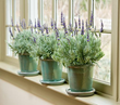 Perfect Holiday Gifts That Never Fail to Please From Online Garden Retailer White Flower Farm