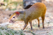 "Oakland Zoo Acquires Three ""R.O.U.S."" Rodents of Unusual Size"