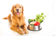 Amazing Pet Expos Shares Top 5 Healthy Habits for Pets and Their Owners