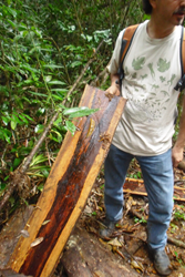Ron Samuels with Rosewood in Central America