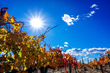 Visit Temecula Valley Announces Friendsgiving Getaway in Temecula Valley, Southern California