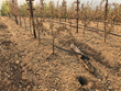 The Pulido~Walker  Estate Vineyards on Mt. Veeder suffered partial damage during the Wine Country fires.