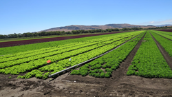 Green agricultural land preserved from development in Santa Clara Valley and Coyote Valley by Land Trust of Santa Clara Valley