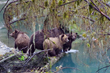 Sonora Resort Sees Record-Breaking Year for Grizzly Bear Viewing in Bute Inlet with Thriving Bear Population