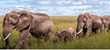 Mervis Diamond Invites You on a South African Safari, Together with ESPN 980 Redskins Radio