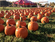 Franklin County Visitors Bureau Recommends Lots of Spooky Fall Fun In Franklin County
