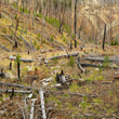 AIA's Tips for Wildfire Recovery