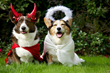 Amica Shares 4 Tips to make Halloween Happier for Pets