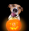 Keep Pets Safe From Ghosts, Goblins And Other Halloween Dangers