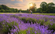 "Lavender Pond Farm Named ""Best Connecticut Attraction"" by USA TODAY 10Best"
