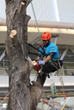 Columbus, Ohio Welcomes Tree Care Industry EXPO