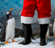 Tennessee Aquarium's Holidays Under the Peaks