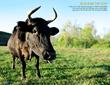 hudson valley farm, hudson valley, farm fresh, csa, biodynamic, organic farming