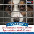 1-800-PetMeds Cares™ Fourth Annual National Animal Shelter Appreciation Week Contest to Grant $1,000 for Pet Rescue