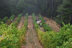 2017 Harvest workers at Famighetti Vineyards in Dry Creek Valley in Sonoma County