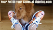 Shoetup Ltd. Acquired By New Owner: Phil Fogliani