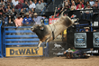 SweetPro's Bruiser Wins PBR and PRCA World Championships